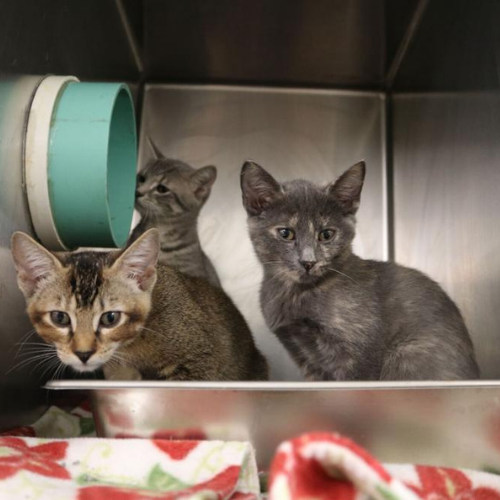 Athens animal shelters see an increase in animal intakes