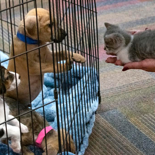 Athens community turns to animal shelters for companionship during COVID-19